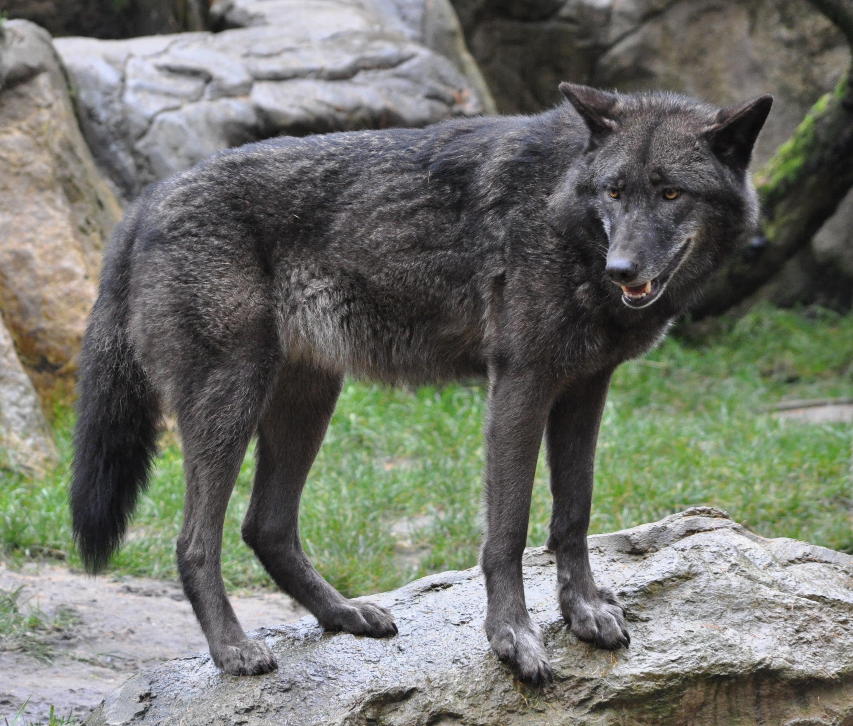 Wolfsarten